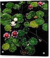 0151-lily - Embossed Sl Acrylic Print