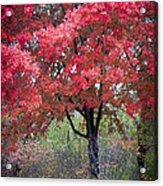 0277 Blazing Red Acrylic Print