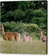 072506-3  Out For A Walk With The Twins Acrylic Print