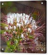 08.03.14 Palo Duro Canyon - Comanche Trail 117e Acrylic Print