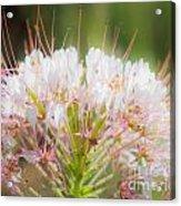 08.03.14 Palo Duro Canyon - Comanche Trail 121e Acrylic Print