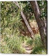 08.03.14 Palo Duro Canyon Rojo Grande Trail 8e Acrylic Print