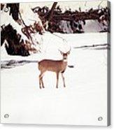 080706-89 Acrylic Print