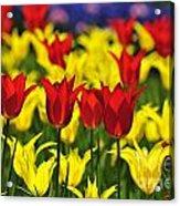 090416p028 Acrylic Print