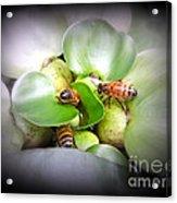1 . 2 . 3 . Honeybees Acrylic Print