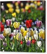 090416p033 Acrylic Print