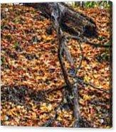 Woods Scene Acrylic Print