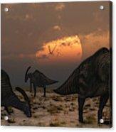 A Herd Of Parasaurolophus Dinosaurs Acrylic Print