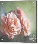 A Moment Of Romance Acrylic Print