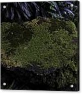A Moss Covered Stone Inside The National Orchid Garden In Singapore Acrylic Print