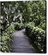 A Raised Walking Path Inside The National Orchid Garden In Singapore Acrylic Print