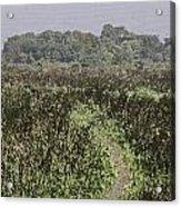 A Small Path Through Very Tall Grass Inside The Okhla Bird Sanctuary Acrylic Print