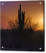 A Sonoran Morning  Acrylic Print