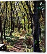 A Walk In The Woods Acrylic Print