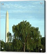 A Weeping Willow Washington Monument Acrylic Print