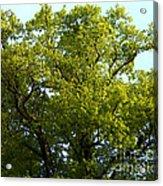 Aaru Acrylic Print