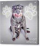 Access To Smart Dog Training Acrylic Print