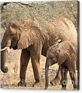 African Elephant Mother And Calf Acrylic Print