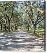 Lowcountry Allee Of Oaks Acrylic Print