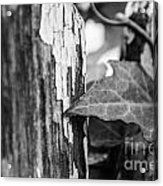 Along The Fence Acrylic Print