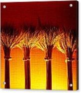 Amber Grains 2 Acrylic Print