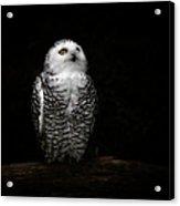 An Owl Acrylic Print
