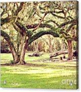 Ancient Oaks Acrylic Print