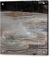 Anemone Geyser In Upper Geyser Basin Acrylic Print