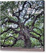 Angel Oak Acrylic Print by Dustin K Ryan