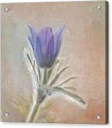 Announcing Spring Acrylic Print