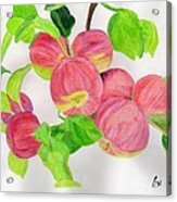 Apples Acrylic Print by Bav Patel