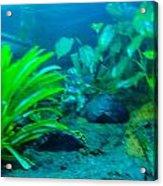 Aquariums Acrylic Print