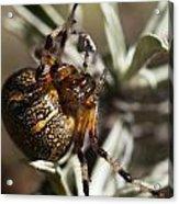 Arachnophobia Acrylic Print