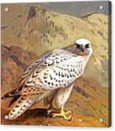 Greenland Falcon Acrylic Print