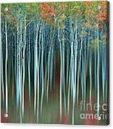 Army Of Trees Acrylic Print