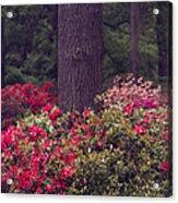 Around A Tree Acrylic Print