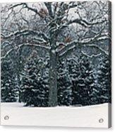 As The Snow Flies Acrylic Print