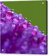 As We Are Acrylic Print