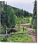 Aspen Trees In Vail - Colorado Acrylic Print