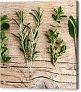 Assorted Fresh Herbs Acrylic Print