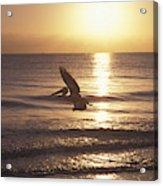 Australian Pelican Glides At Sunrise Acrylic Print