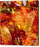 Autumn Bright Acrylic Print