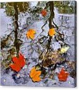 Autumn Acrylic Print by Daniel Janda
