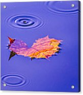 Autumn Drops Acrylic Print