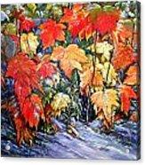 Autumn Frost Acrylic Print