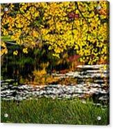 Autumn Pond 2013 Acrylic Print