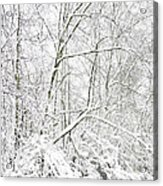 Autumn Snow  Acrylic Print