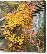 Autumn Steps Near Smalls Falls In Maine Acrylic Print
