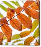 Autumn Upshot Acrylic Print