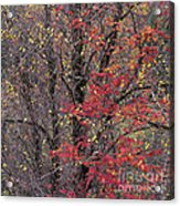 Autumn's Palette Acrylic Print